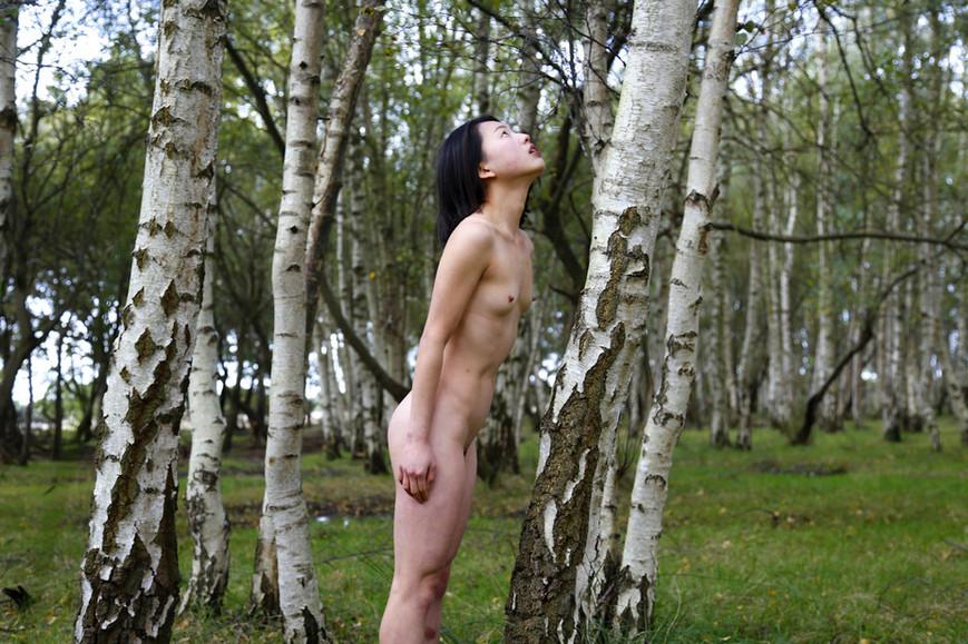 parallel-arboreal-iiijpg