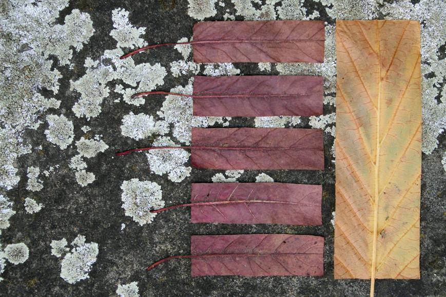 geometric-autumn-ivjpg