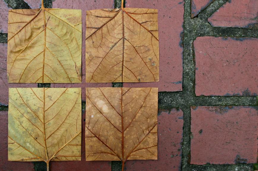 geometric-autumn-xiijpg