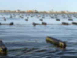 oysterfarm.jpg