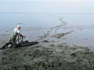 Racing the Wadden Sea with a mud sled