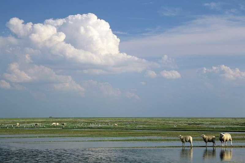 tidal marshlands Frisia