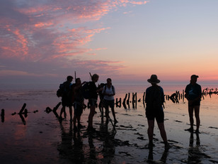 A Wadden Sea Guide and His Twelve Disciples