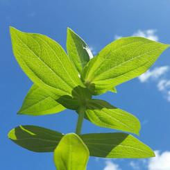 sky plant.jpg