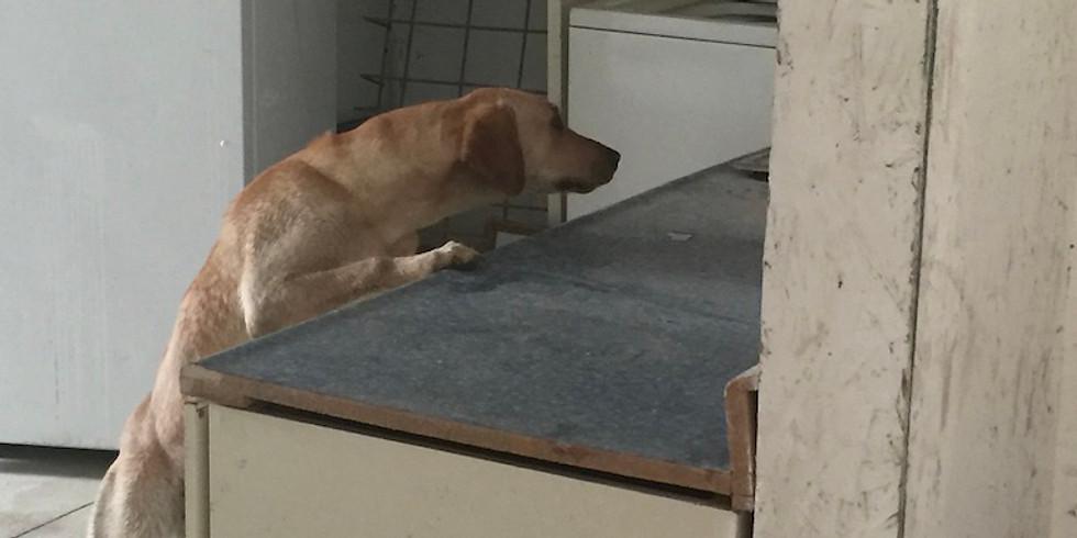 Human Remains Detection Dog Forensics Lvl 1 > IA Oct 2019