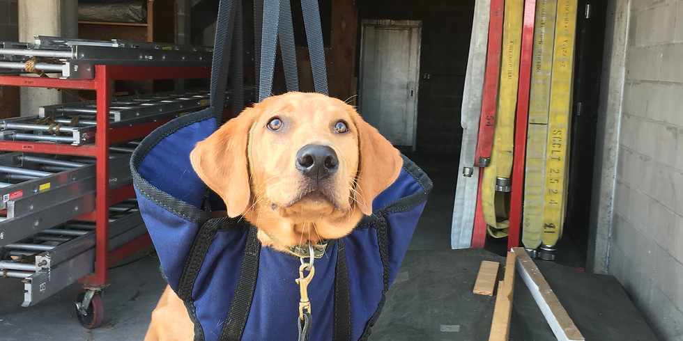 Working Puppy Foundations -- Raising a working dog