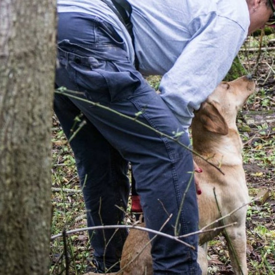 Individual K9 Coaching - 4 Session Package