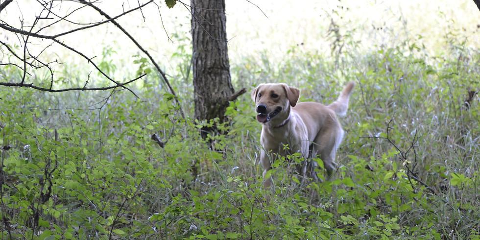 2019 Mass Casualty HRD Dog Workshop > KS (1)