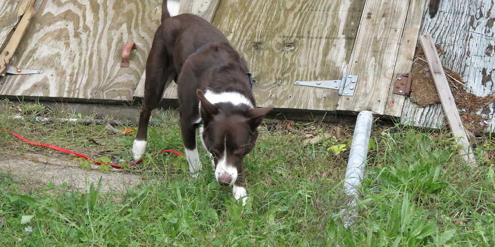 HRD Dog - Foundations > IA 2020