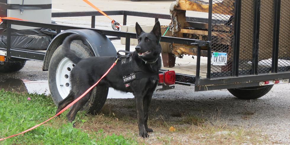HRD Dog - Forensics Basic > IA May 2020