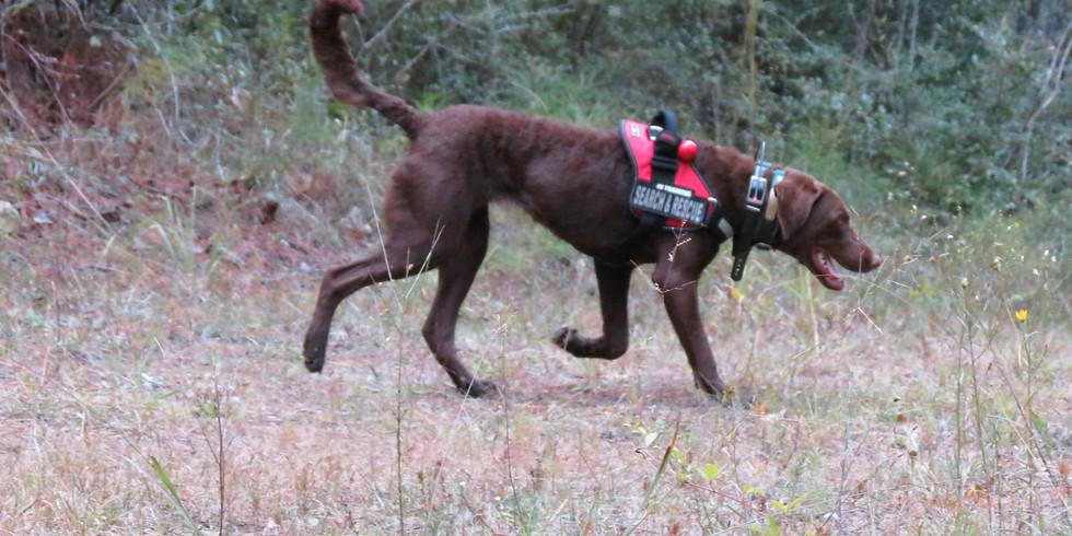 HRD Dog - Clandestine Graves & Historic Burials > IA Spring 2021