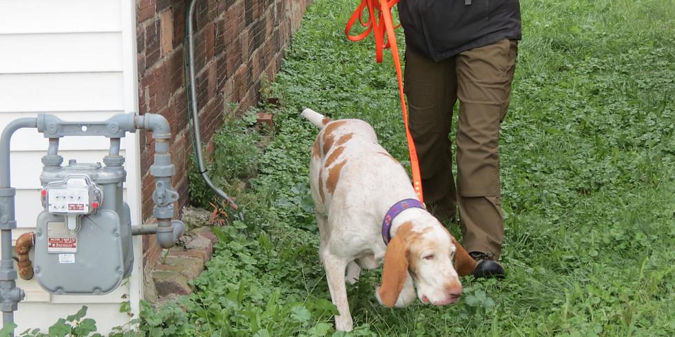 HRD Dog - Advanced Burials & Clandestine Graves > IA Fall 2020