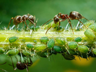 THE HARD WORKING ANT