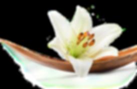 Permanent Make-up, Wimpernlifting, Lash lifting, Wimpernverlängerung, Lash Extensions, Make-up, Kosmetik, Goldeneye, Couleur Caramel, Xtreme Lashes, Regula, Aloe Vera Gel, Pigmentistin, Visagistin, Lashstylistin, Naturkosmetik, Natural PMU, Esthetik, Schönheit, Beauty, Swizterland, Woman, Naturwimpern, Gutschein, MANUK Permanent Make-up,