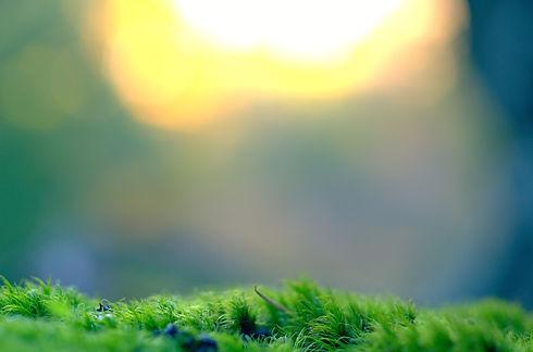 moss-983908_1920.jpg