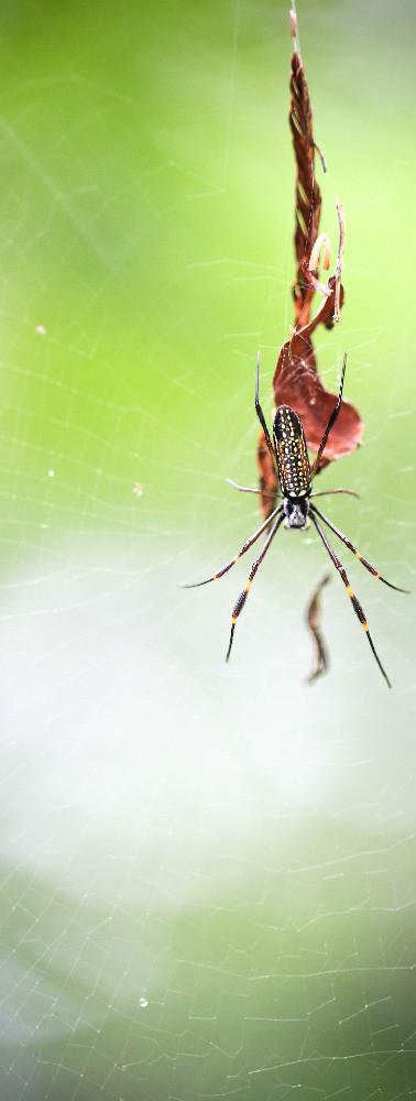 araignée2_modifié.jpg