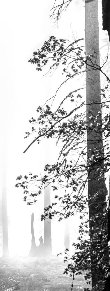 sequoi_treesbis.jpg