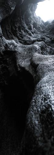 sequoia_trees5.jpg