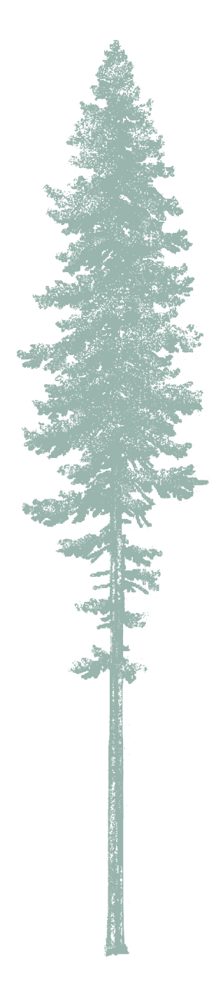 Portland Oregon Health Tree