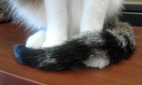 Jack paws.jpg