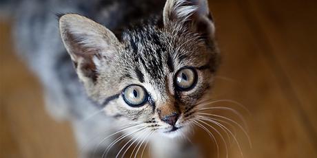 covid cat pic.png