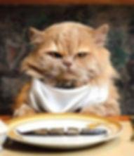cat-nutrition.jpg