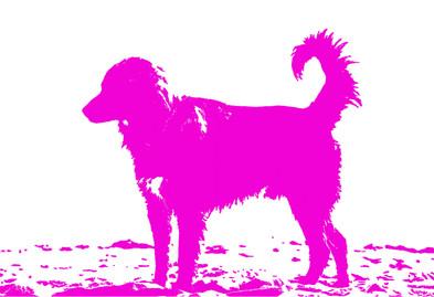 Dog pop.jpg