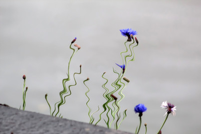 flowers shadows.jpg