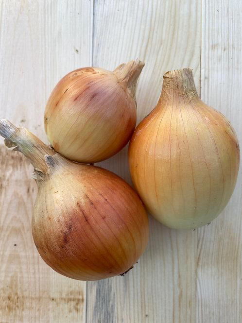 Onions, Yellow (1)
