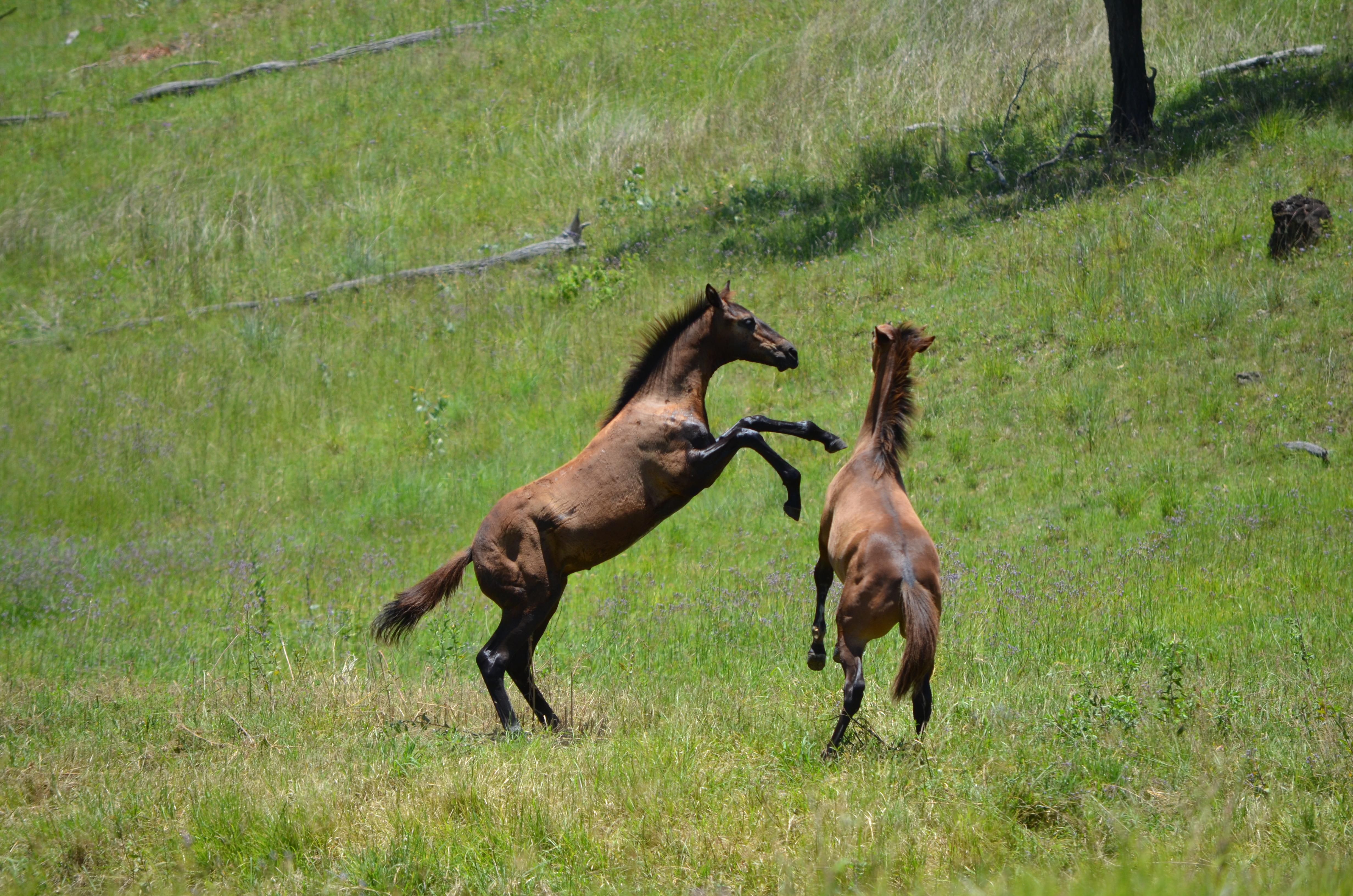 foals mares dec 2011 038
