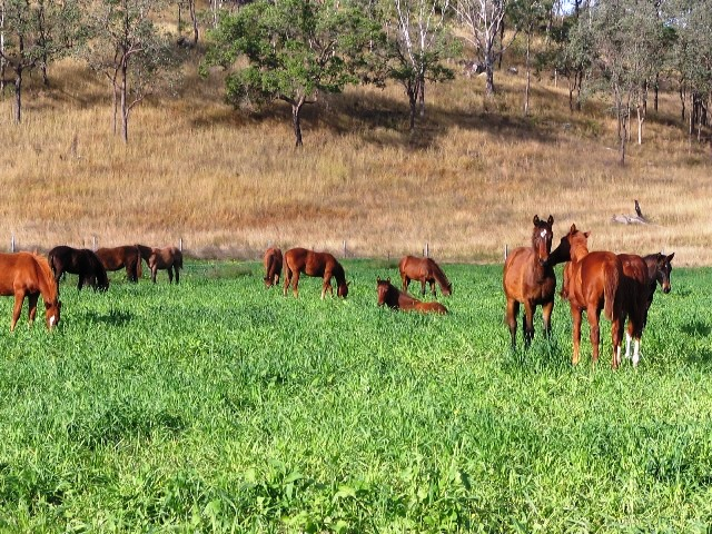 09 foals yearlings 004