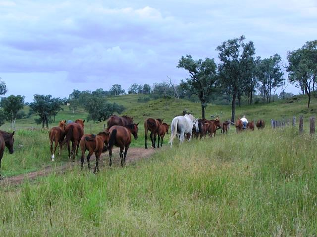 Taking broodmares to wean faols March 10larger