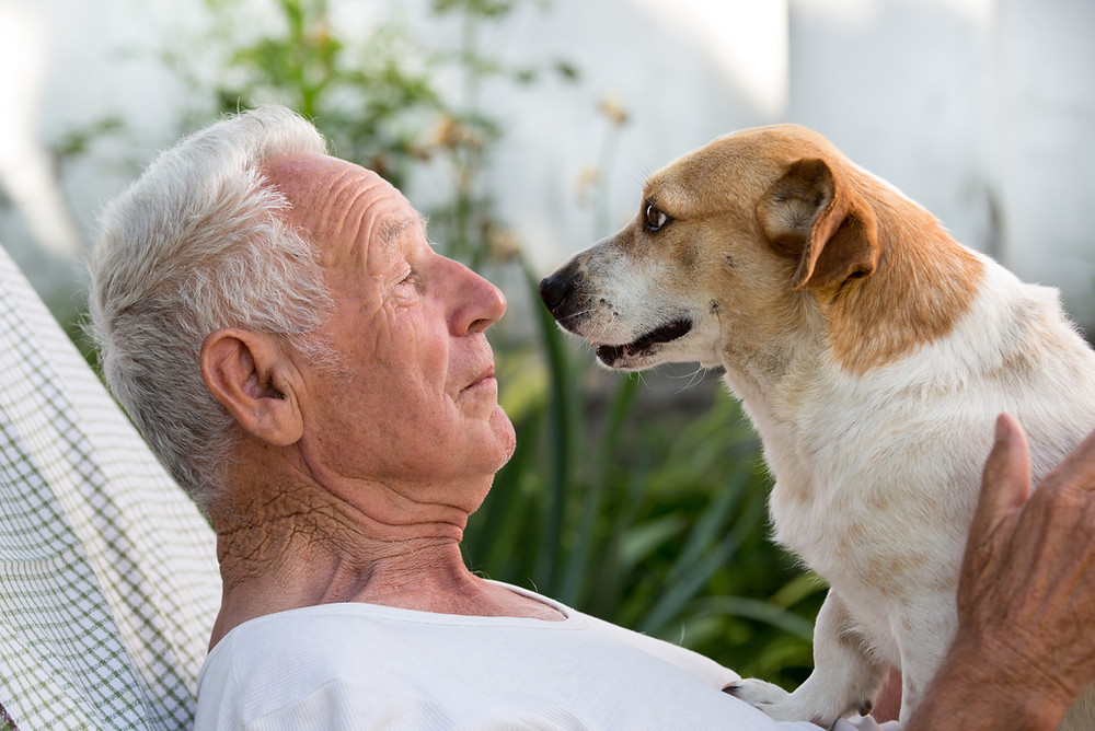 setting up trust for pet pets will wills estate planning south shore ma