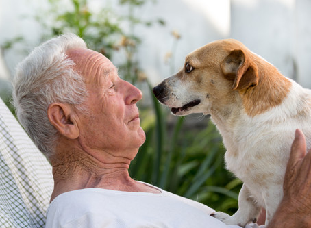 "How to Plan a ""Pet Trust"" to Protect Your Pet After Your Death"