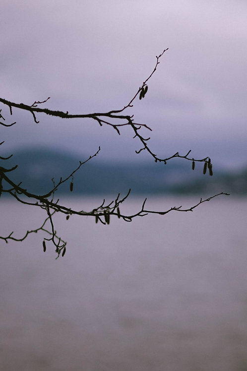 Sparse Branches