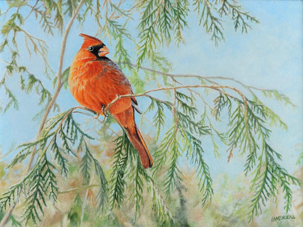 """Cardinal In Cedars"""