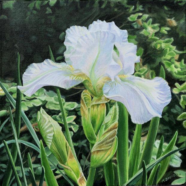 """""""White Iris"""""""