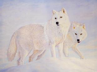 """""""Arctic Wolves"""""""