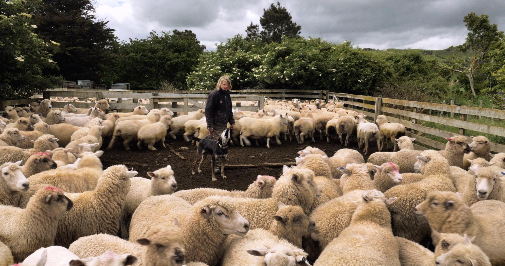 MEAT_JILL_STILL01_Jill_Shifts_Sheep