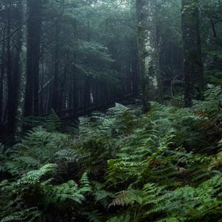 The Great Ferns.jpg
