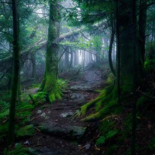 The Light of Beartown V3.jpg