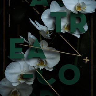 Astrea Orchid.jpg