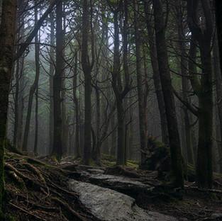 Within The Fog.jpg