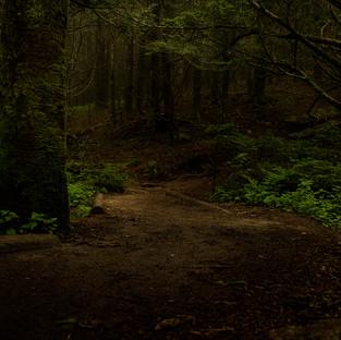 Forest of Darkness.jpg