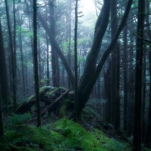 Tree of Light V3.jpg