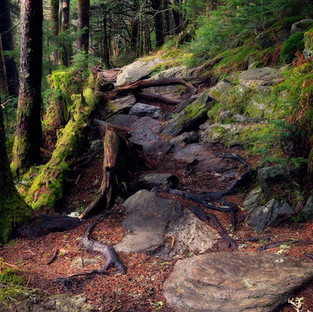 Mount Mitchell New Paths.jpg