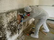 mold ispecton, accuate property inspection, air quality inspecton