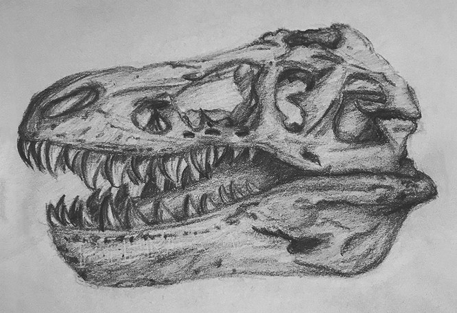Natural History Kimberly Bricknell.jpg