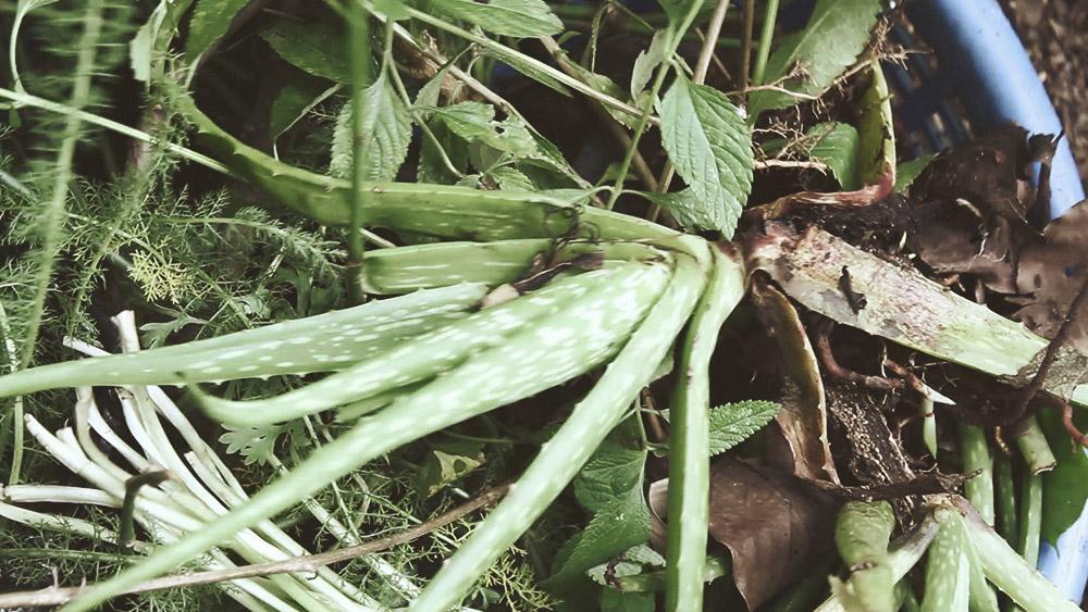 03 platas sembradas