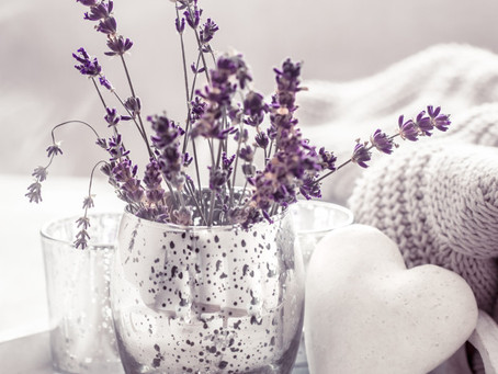 Lavender - benefits, uses and tips